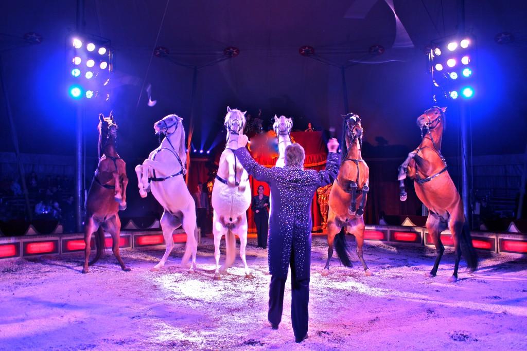 Cirkus Dannebrog besøger Lystrup den 31. maj. Foto: Cirkus Dannebrog