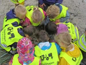 Børn er ofte nysgerrige og interesserede i ting, man kan opleve f.eks. på en strand. Her studerer børn fra institutionen Stenhøjen levende rejer, der er fanget ved stranden ved Mindelunden i Skæring. Lidt senere blev rejerne tilberedt på et stormkøkken og spist. (Foto: Kell Jensen)